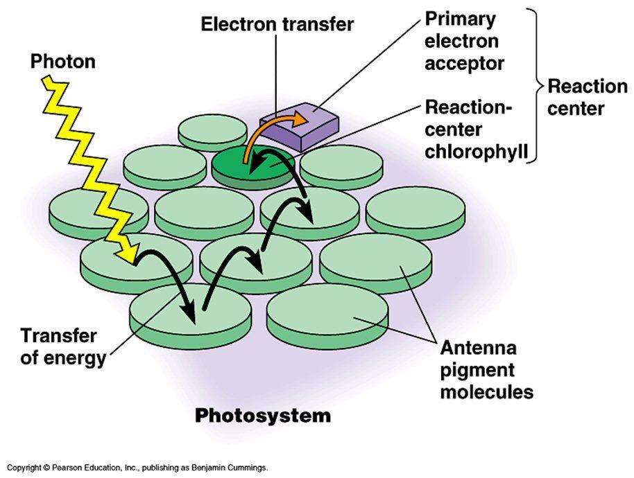Gallants biology stuff ccuart Choice Image